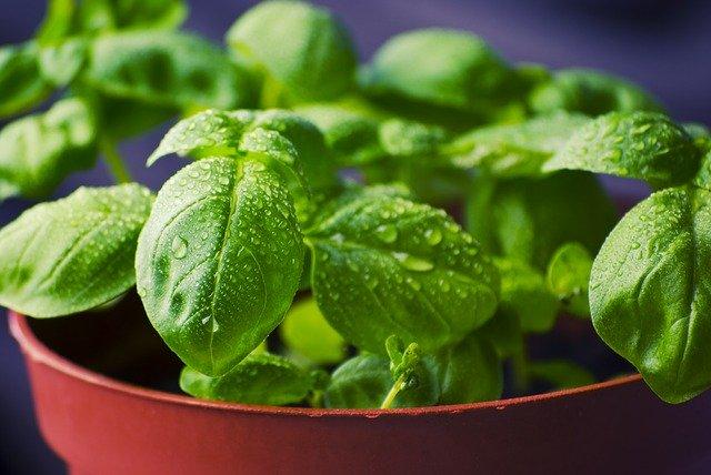 as 5 ervas que atraem energias positivas